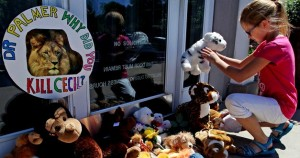 In Bloomington MN a little girl places a stuffed lion at the front door of the River Bluff Dental Clinic