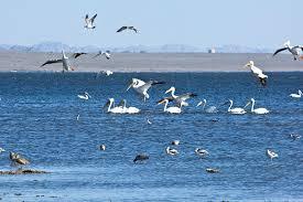 Salton Sea Memories