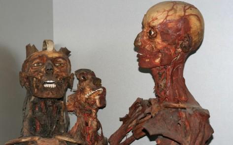 dr-girolamo-segato-heads